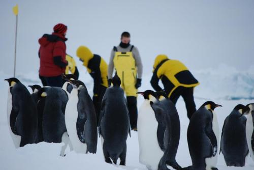Emperor Penguins are fascinated by these strange, colourful beings doing strange things with the ice. I wish my office now was graced by their waddling presence. Photo by Ruhi Humphries